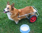 wheelchairs for dogs