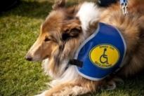 service dog certification