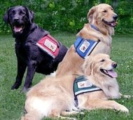 types of service dogs